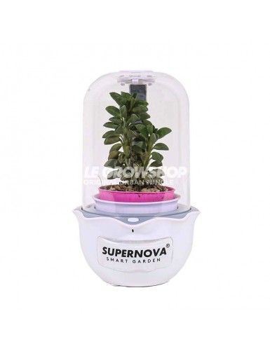 Smart Garden Magic Cuisine V10 Supernova Garden