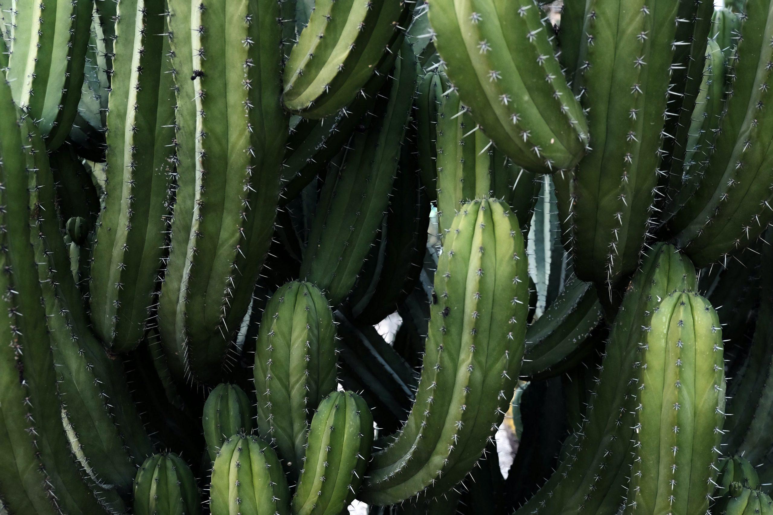 Mes plantes subissent du stress, comment le détecter et y remédier