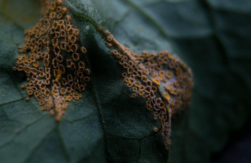 Quelles maladies peuvent toucher mes plantes ?