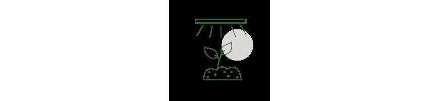 Bouturage - Eclairage semis et boutures - GrowShop Urban Jungle